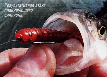 на что клюет речная рыба