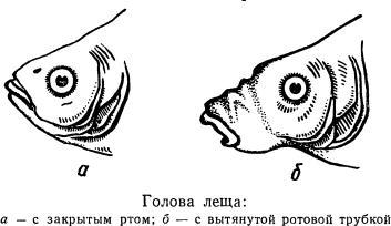 прикормка рыбы таблица