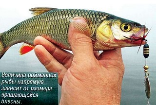время ловли речной рыбы