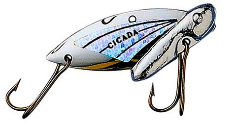 Reef Runner Cicada